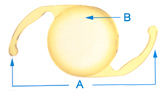 A - Arms ( haptics) B - Lens body (optic) The ACRYSOF® Natural IOL lens is a single-piece lens.  The arms (or haptics) that keep the lens centered and secure are made of the same soft acrylic material as the lens body.