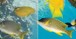 zeissfish